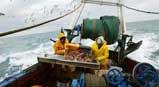 Pêche au chalut à Concarneau ©lefigaro