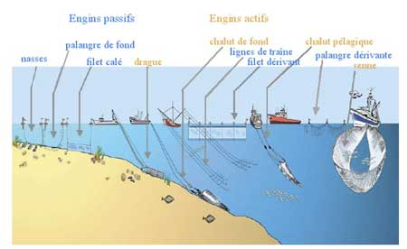 les différentes tehniques de pêche, lien vers le site de l'ifremer