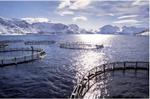 Une ferme marine en Norvège