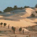 Palmiers-dattiers à l'horizon