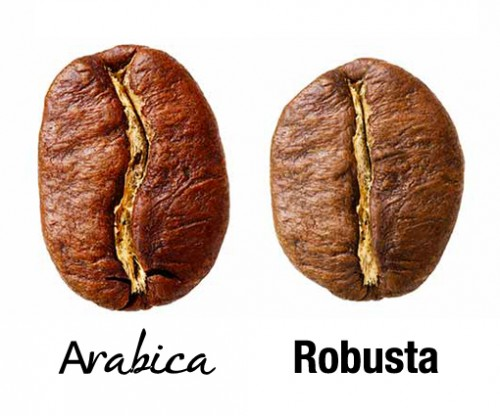 cooktoo_cafe_Robusta_Arabica